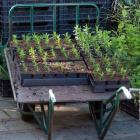 Nursery's & Plant Collections