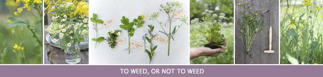 7. Weeds