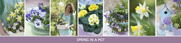 Voorjaarspotten, Viola, Primula