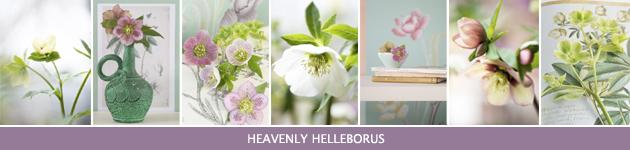 1. Heavenly Helleborus