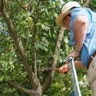 Pruning Prunus
