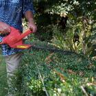 Pruning Hedges Electrically