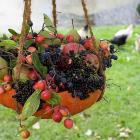Birdfruitbasket